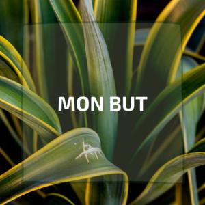 le_but_accompagnement_bien-etre